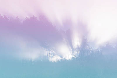 Photograph - Fairy Light In Misty Woods by Jenny Rainbow
