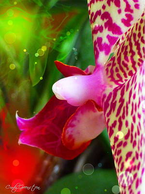 Photograph - Fairy Orchid by Cindy Greenstein
