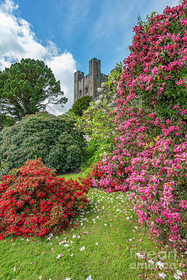 Photograph - Fairy Tale Garden by Adrian Evans
