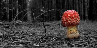 Mushroom Digital Art - Fairy Tale Mushroom by David Paul Murray