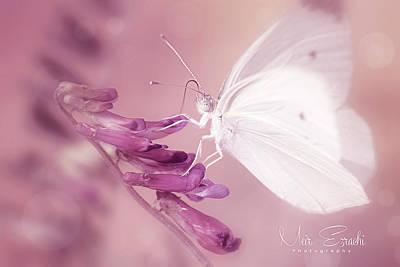 Photograph - Fairy Tales by Meir Ezrachi