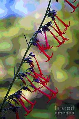 Photograph - Fairy Trumpet by Barbara Schultheis