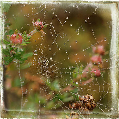 Photograph - Fairy Whispers - Nature Art by Jordan Blackstone