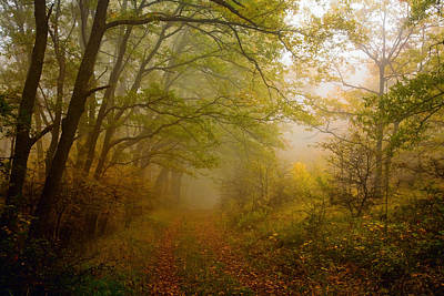 Fairy Wood Print by Evgeni Dinev
