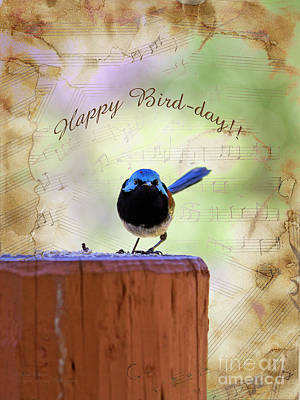 Photograph - Fairy Wren by Elaine Teague