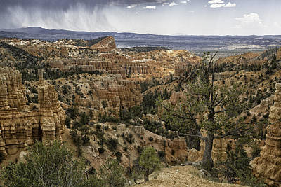 Photograph - Fairyland Canyon by Elizabeth Eldridge