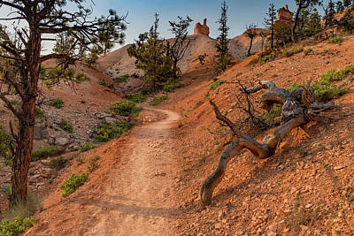 Photograph - Fairyland Loop Trail by Phil Abrams