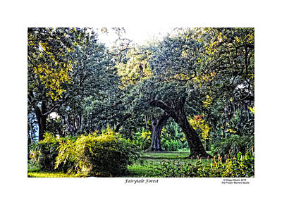 Photograph - Fairytale Forest With Border by Maggy Marsh