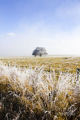 Photograph - Fairytale Winter In Fingal by Jorgo Photography - Wall Art Gallery
