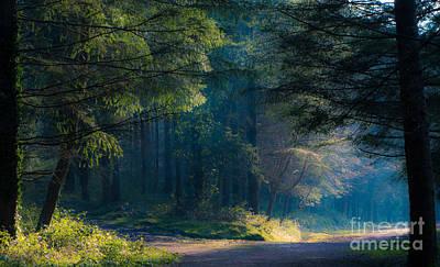 Fairytale Woods Art Print