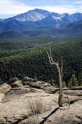 Photograph - Faithful Sentinel by Tim Newton