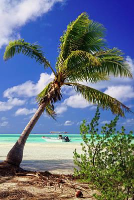 Photograph - Fakarava Blue Lagoon Palm by Stulaine Studios