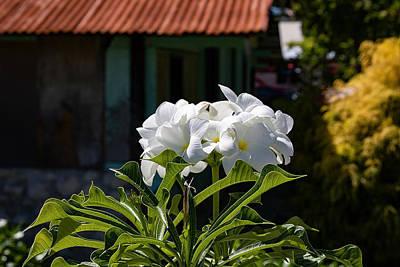 Photograph - Fakarava Flora by Martin Naugher