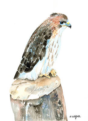Falcon Painting - Falcon by Arline Wagner