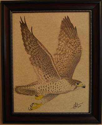 Drawing - Falcon / Faucon by Benoit Charron