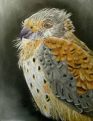 Pastel - Falcon by Joan Mansson