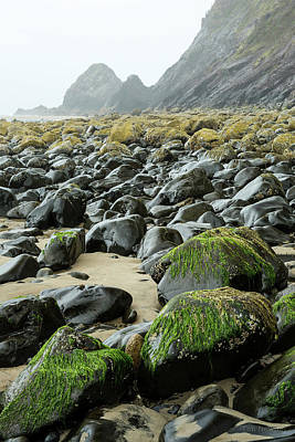Photograph - Falcon Sea Stack by Tim Newton