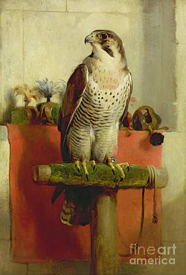 Bird Painting - Falcon by Sir Edwin Landseer