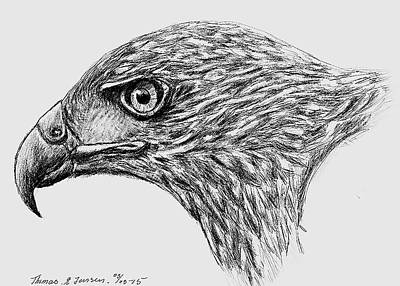 Drawing - Falcon by ThomasE Jensen