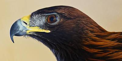 Photograph - Falconer's Hawk - Harris Hawk by KJ Swan