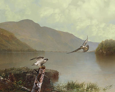 Painting - Falcons At Flagstaff Lake by IM Spadecaller