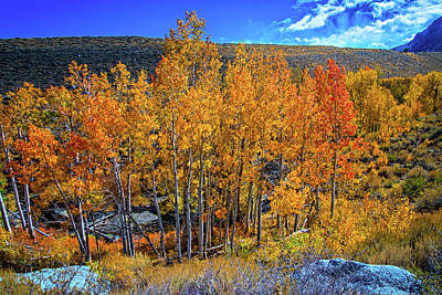 Photograph - Fall Above Mcgee Creek by Lynn Bauer