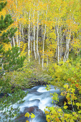 Photograph - Fall Along Bishop Creek by Joe Doherty