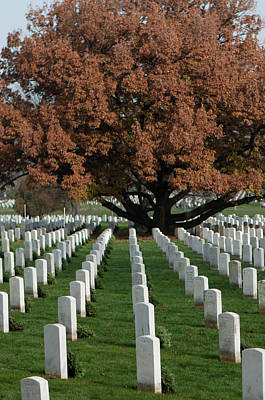 Photograph - Fall Arlington Cemetary by Brian Green