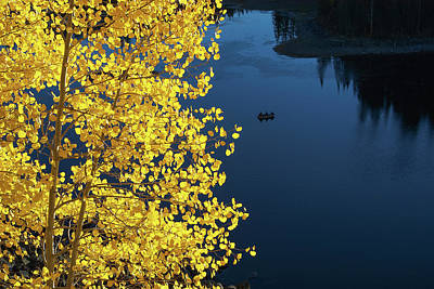 Photograph - Fall Aspen And Lake by Roy Kastning