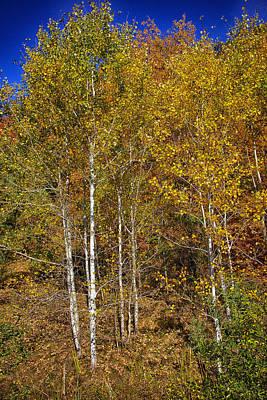 Blue Photograph - Fall Aspen by Hugh Smith