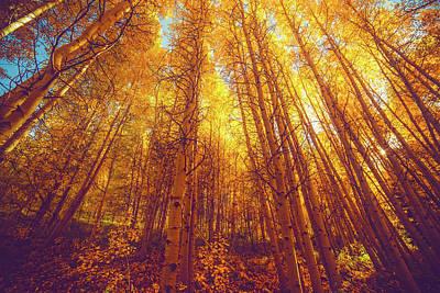 Photograph - Fall Aspens In Colorado by Andrew Preble