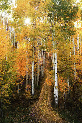 Photograph - Fall Aspens by TL  Mair
