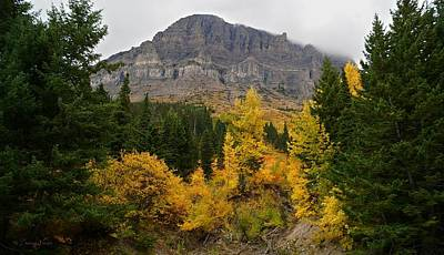Photograph - Fall At Going To The Sun Mountain by Tracey Vivar