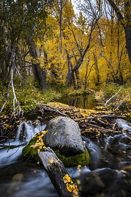 Photograph - Fall At Mcgee Creek by Cat Connor