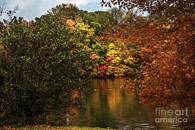Photograph - Fall At The Lake by Judy Wolinsky