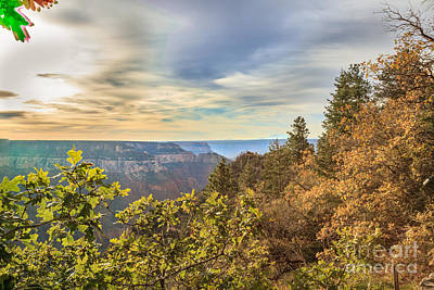 Photograph - Fall At The North Rim by Robert Bales