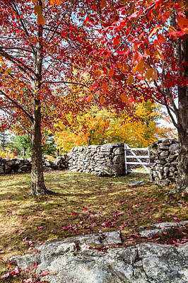 Photograph - Fall At The Pound by Robert Clifford