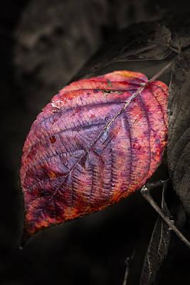Photograph - Fall Beech Leaf by Dick Pratt