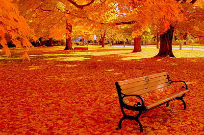 Fall Bench  Newburyport Ma Art Print by Suzanne DeGeorge