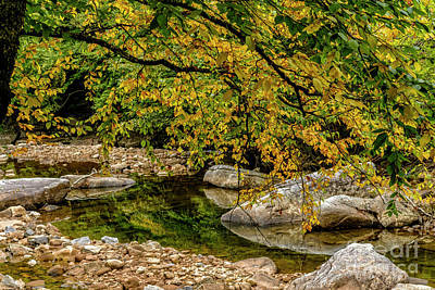 Photograph - Fall Birch Along Williams River by Thomas R Fletcher