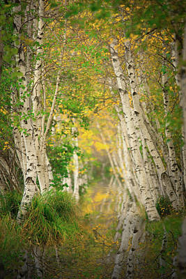 Photograph - Fall Birch  by Emmanuel Panagiotakis