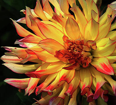 Photograph - Fall Bloomer by Carol Kinkead