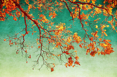 Photograph - Fall Branches by Carolyn Derstine