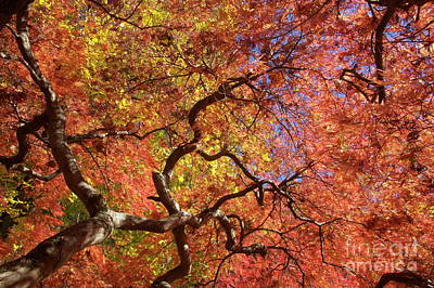 Photograph - Fall Branches by Mark Messenger