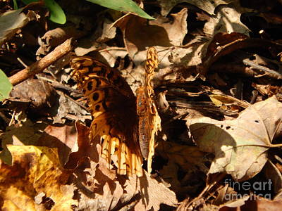 Photograph - Fall Butterfly by Chris Tarpening