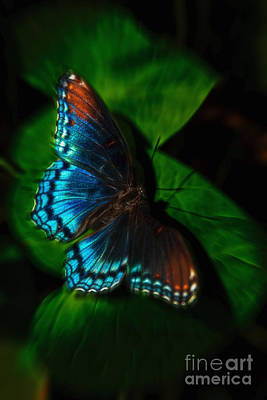 Photograph - Fall Butterfly by Larry McMahon