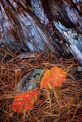 Photograph - Fall By An Old Tree Stump by Carolyn Derstine