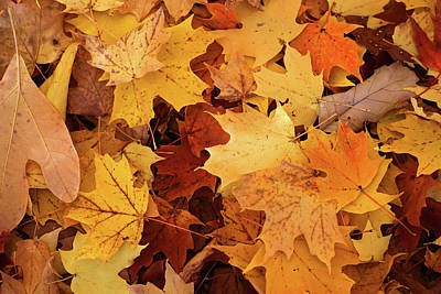 Photograph - Fall Carpet 10 by Mary Bedy