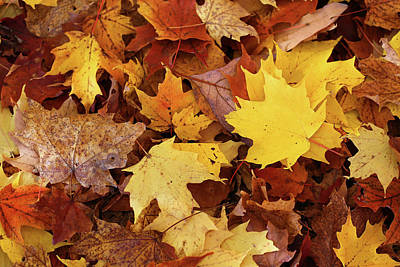 Photograph - Fall Carpet 11 by Mary Bedy