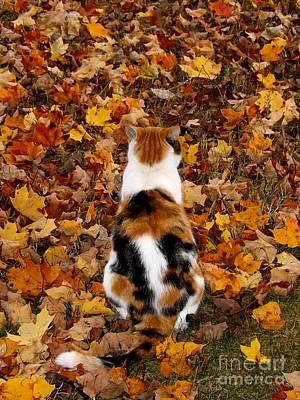 Photograph - Fall Catitude  by Christy Ricafrente